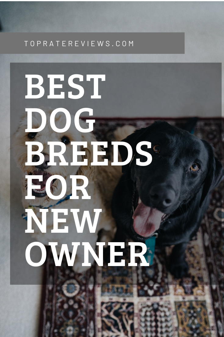 Best Dog Breeds for new owner