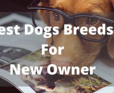 types-dogs-breeds-for-first-timers