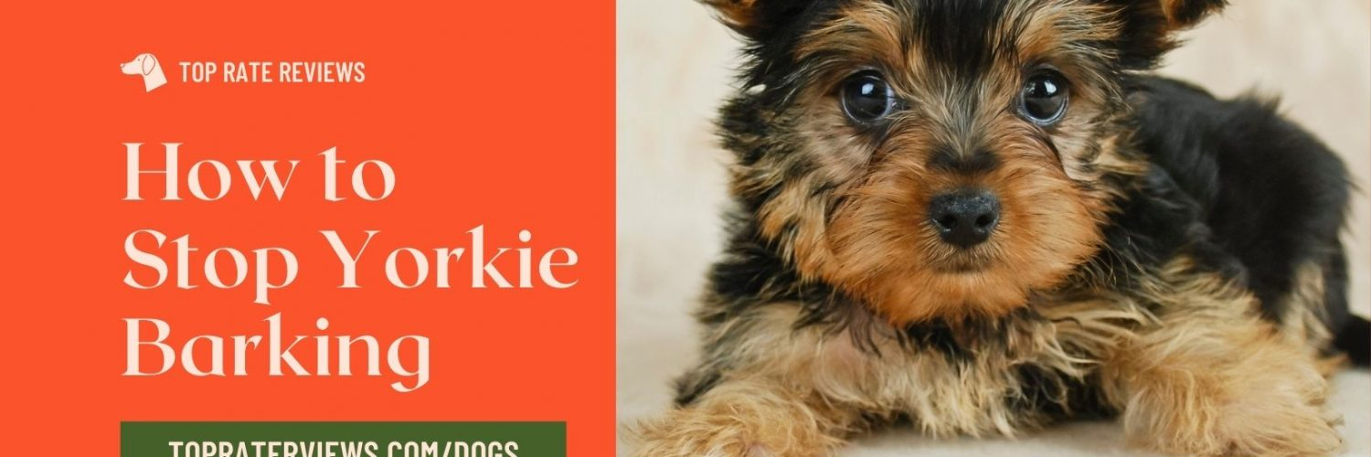 How to get a Yorkie to stop barking