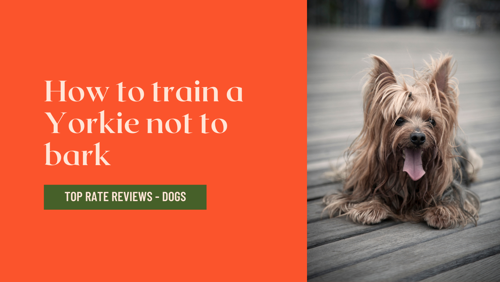 How to train a Yorkie not to bark