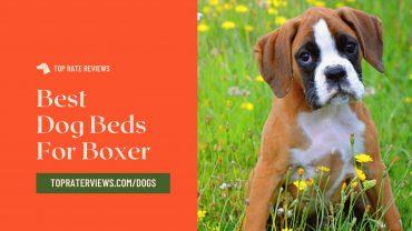 boxer dog bed