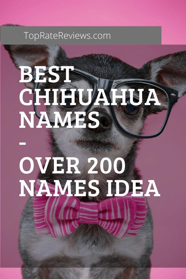Best Chihuahua Names