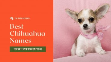 Name for your chihuahua