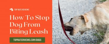 How To Stop Dog From Biting Leash