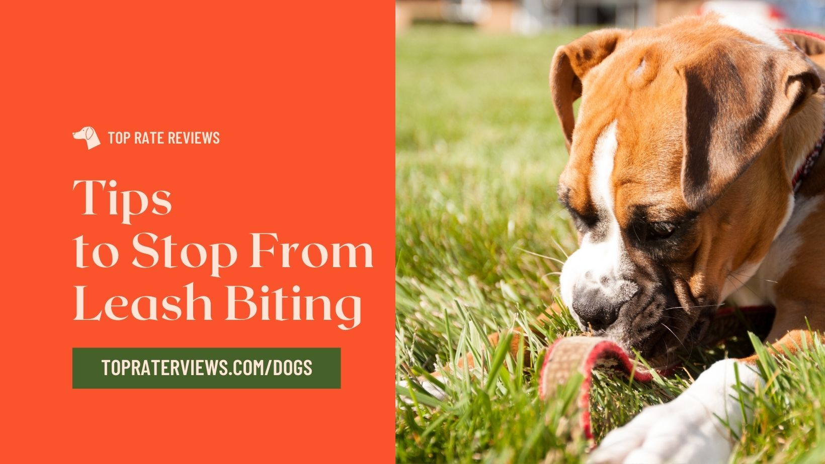 Tips to Stop your Dog From Leash Biting