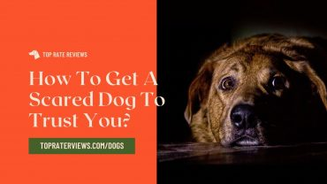 how to get your dog to trust you