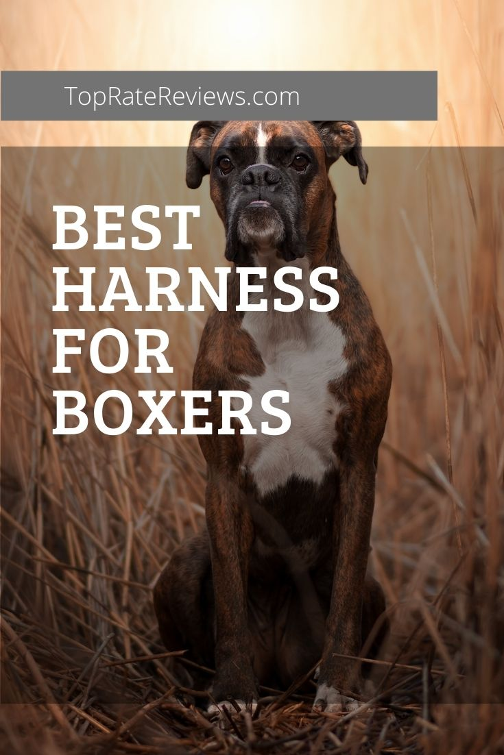 best dog harness for boxer