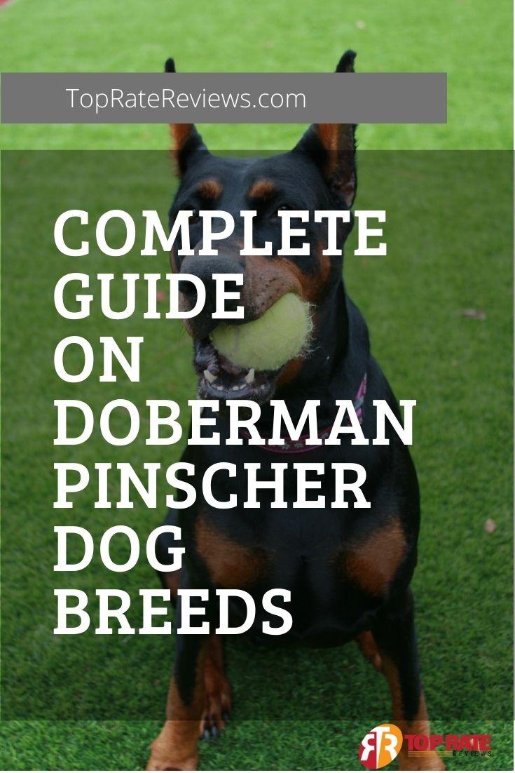 About Doberman Pinscher Breeds