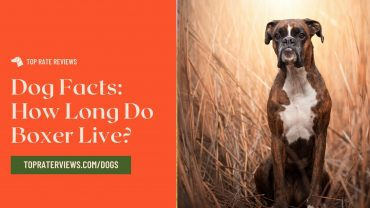 How long Do Boxer Live