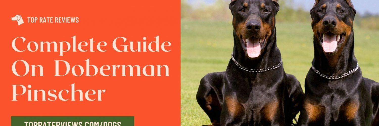 Doberman Pinscher breed dogs