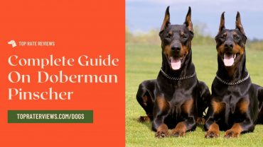 Doberman Pinscher breed dogs