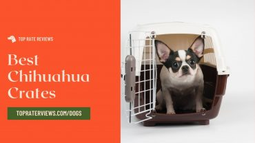 Best Chihuahua Crates