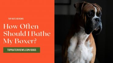 How Often Should I Bathe My Boxer
