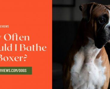 How Often Should I Bathe My Boxer