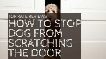 How To Stop Dog From Scratching The Door