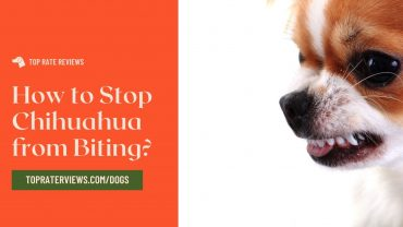 How to Stop Chihuahua from Biting