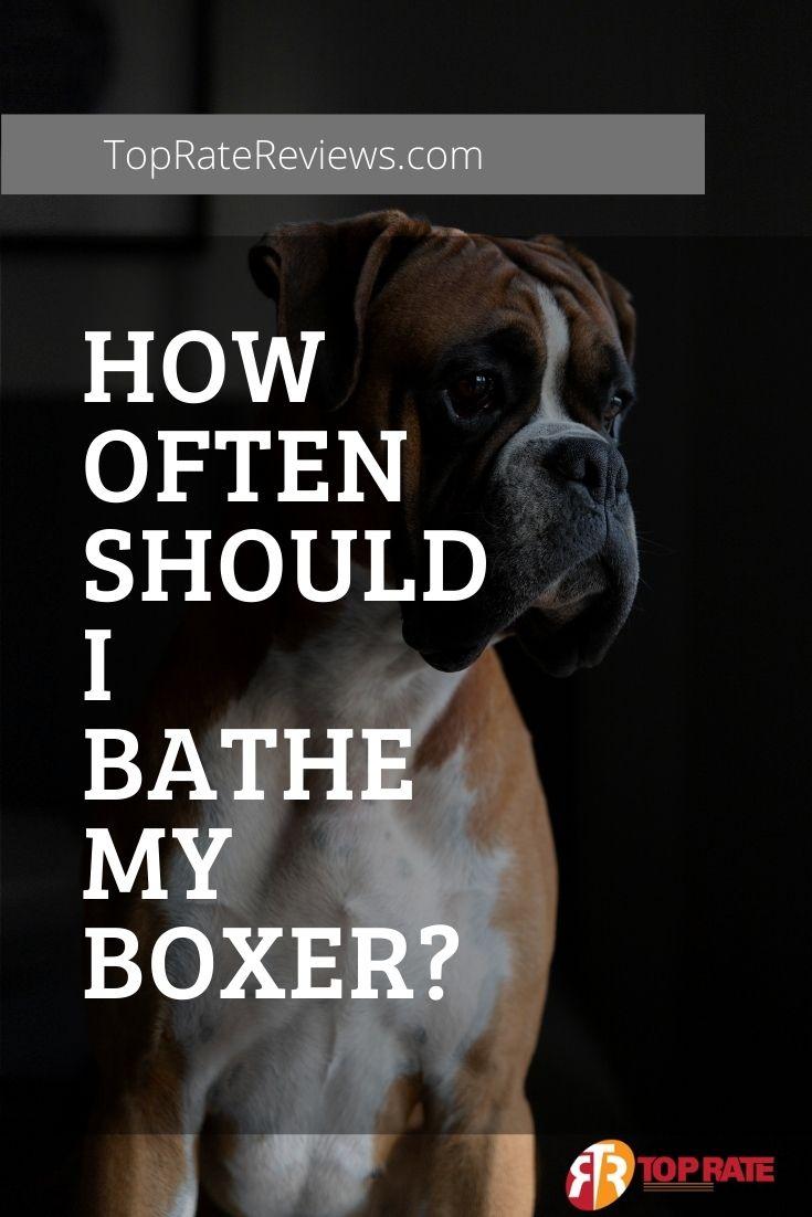 Boxer Bath