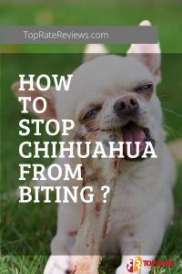 Stop Chihuahua From Biting
