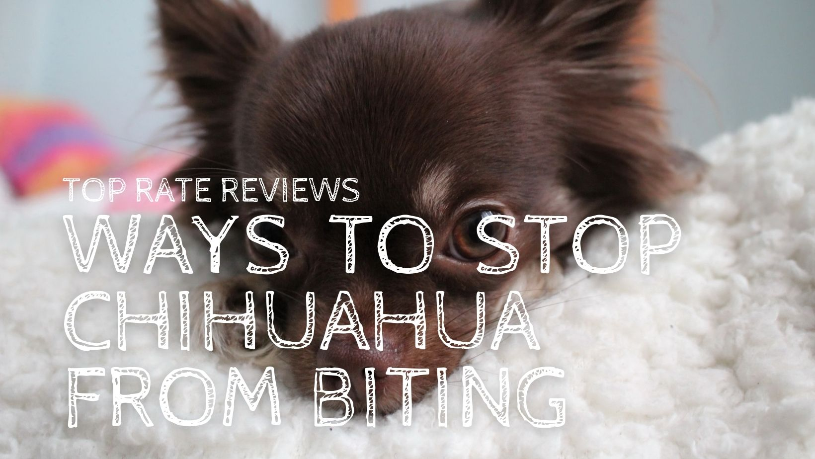 WAYS to Stop Chihuahua from Biting