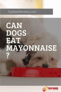 Can Dogs Eat Mayonnaise