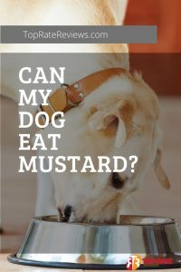 Can My Dog Eat Mustard