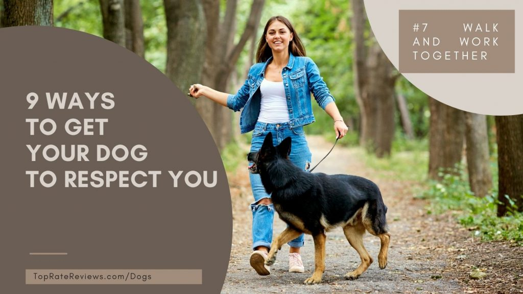 Ways to get your dog respect you- work and walk with dogs