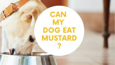 can dogs have mustard