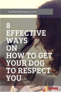 how to gain a dogs trust