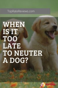 When Is It Too Late To Neuter A Dog
