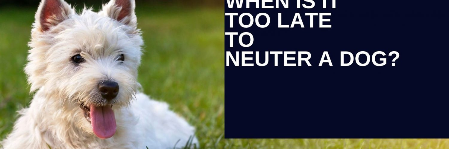 at what age can you neuter a dog