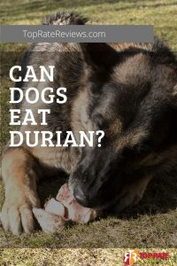 can dogs have durian fruit