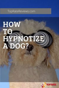 can you hypnotize your dog